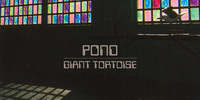 "Listen to Pond - ""Giant Tortoise"" (MP3 Download)"